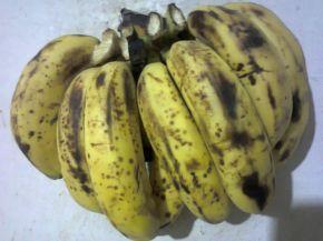 Banana_bunch_on_wall